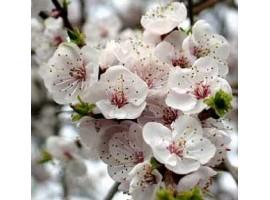 Деревья и сад весной. Что произойдёт, если не ухаживать